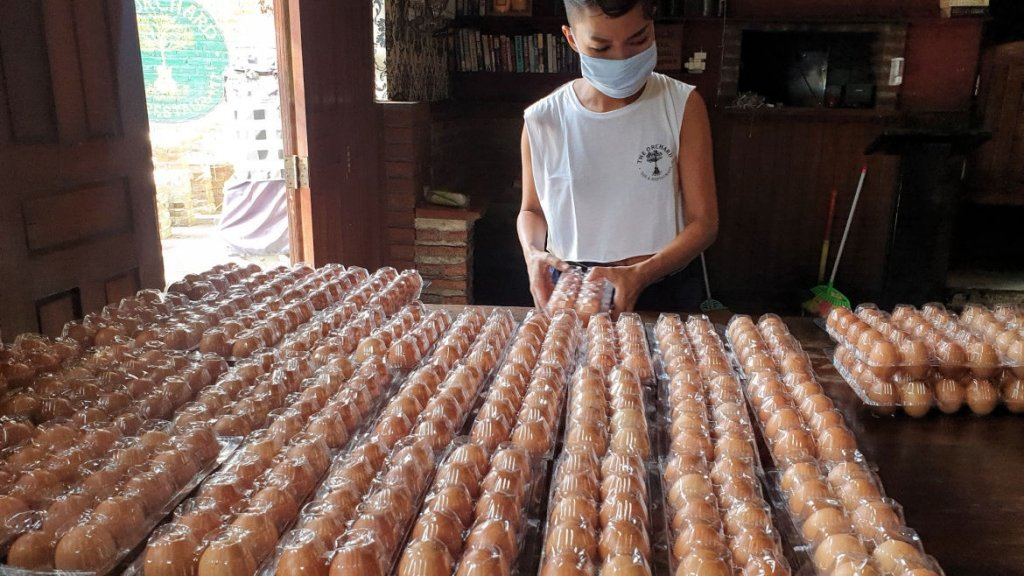 Bali Musicians Appeal - Egg Delivery